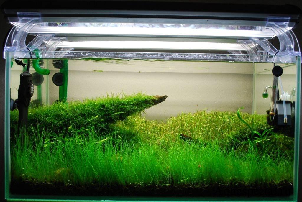 Освещение аквариума люминесцентными лампами и другими источниками света   аквариумные рыбки