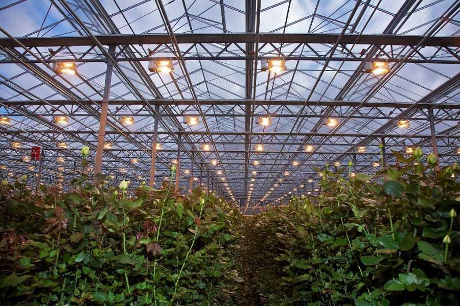 Освещение для теплицы из поликарбоната: виды освещения, какое должно быть и как правильно рассчитать мощность, как сделать своими руками, видео